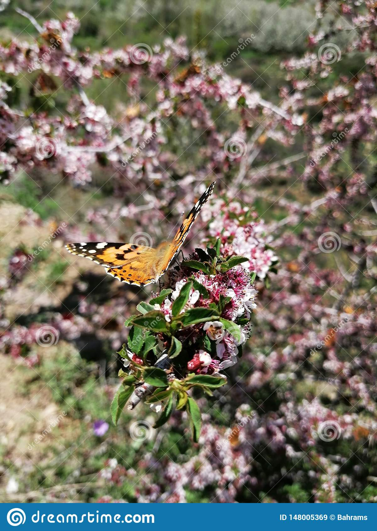 Beautiful Butterfly on the flowers of a wild tree