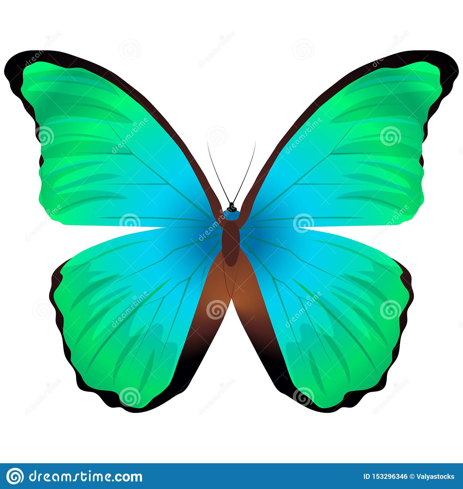 Beautiful butterfly isolated on a white background. Great orange tip glaucippe butterfly