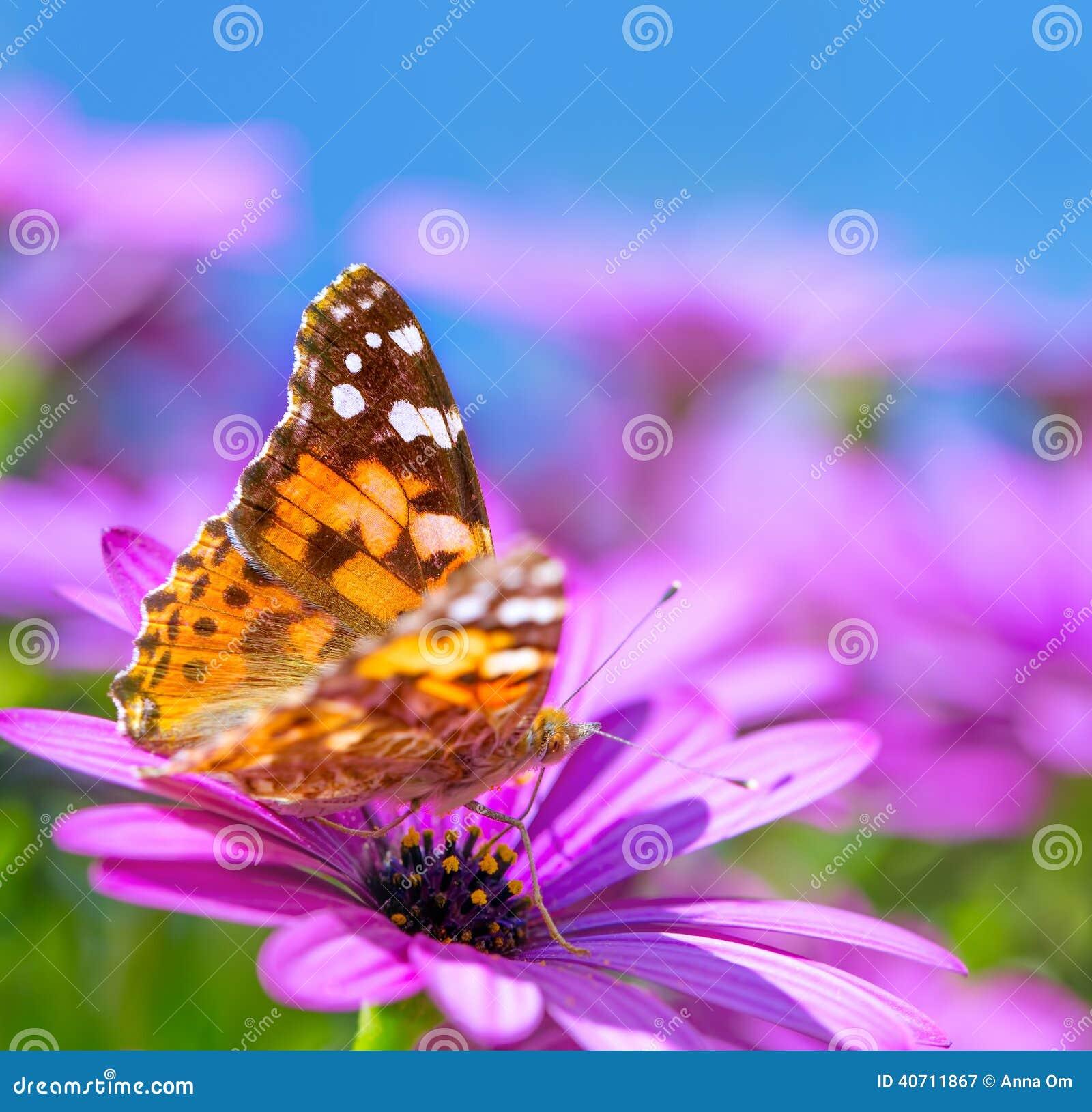 beautiful butterfly on purple flower stock image image