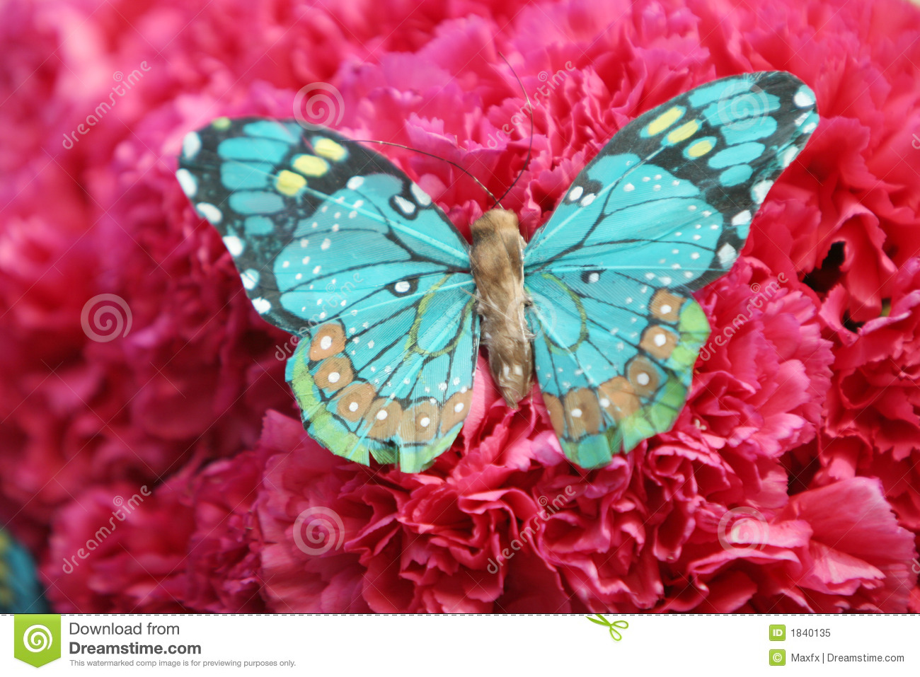 Beautiful butterfly on red carnations
