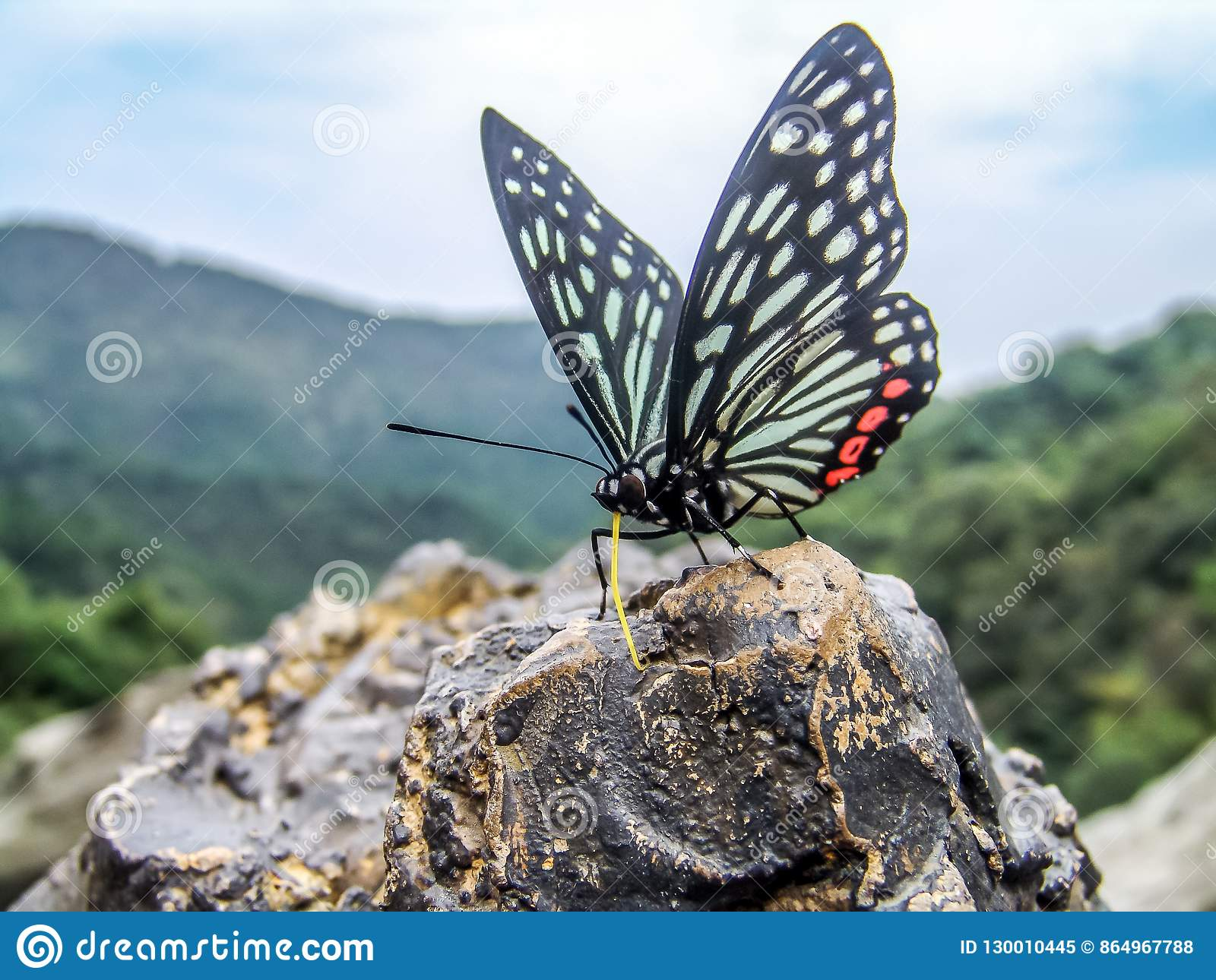 A butterfly resting on a rock