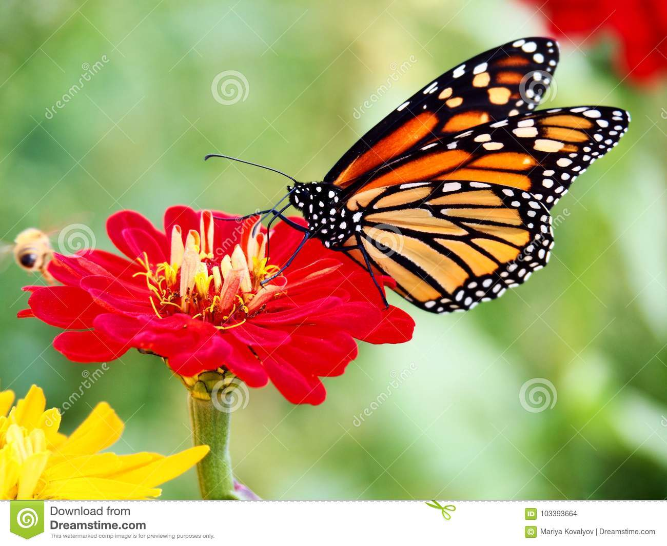 Beautiful Butterfly Sitting On A Flower Stock Photo ...