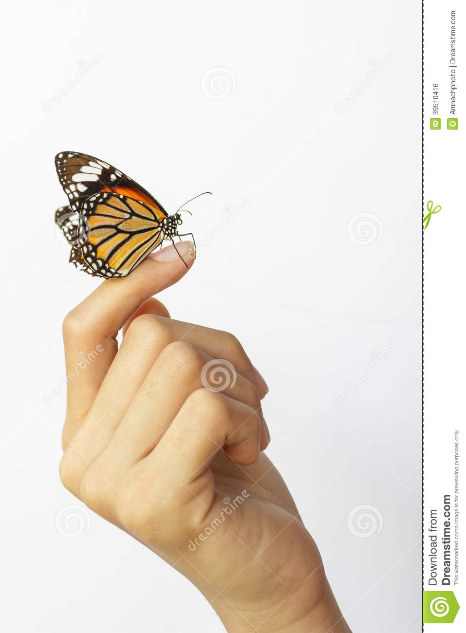Beautiful butterfly sitting on the girl hand.