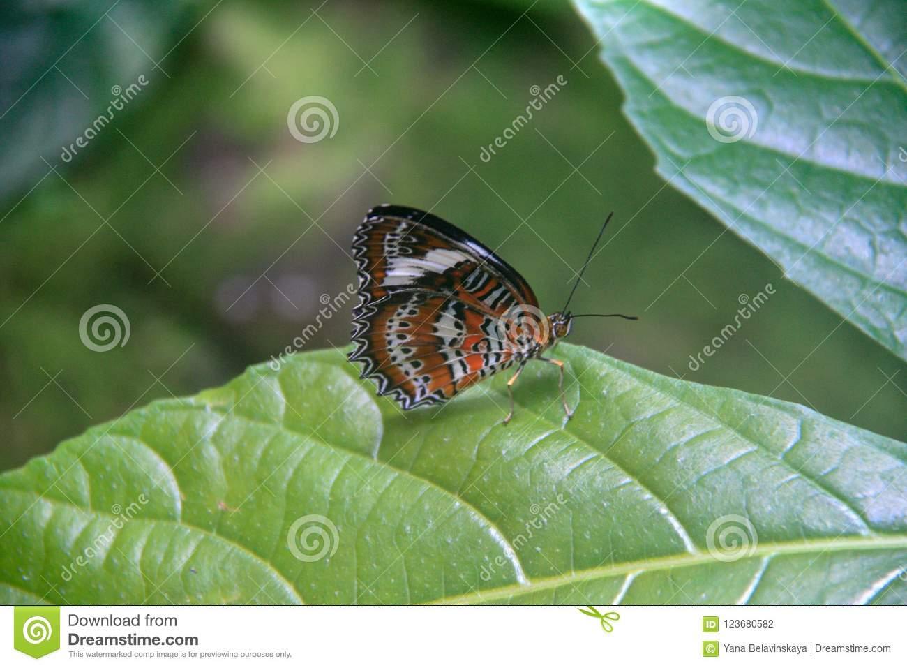 Beautiful butterfly sitting on a green leaf