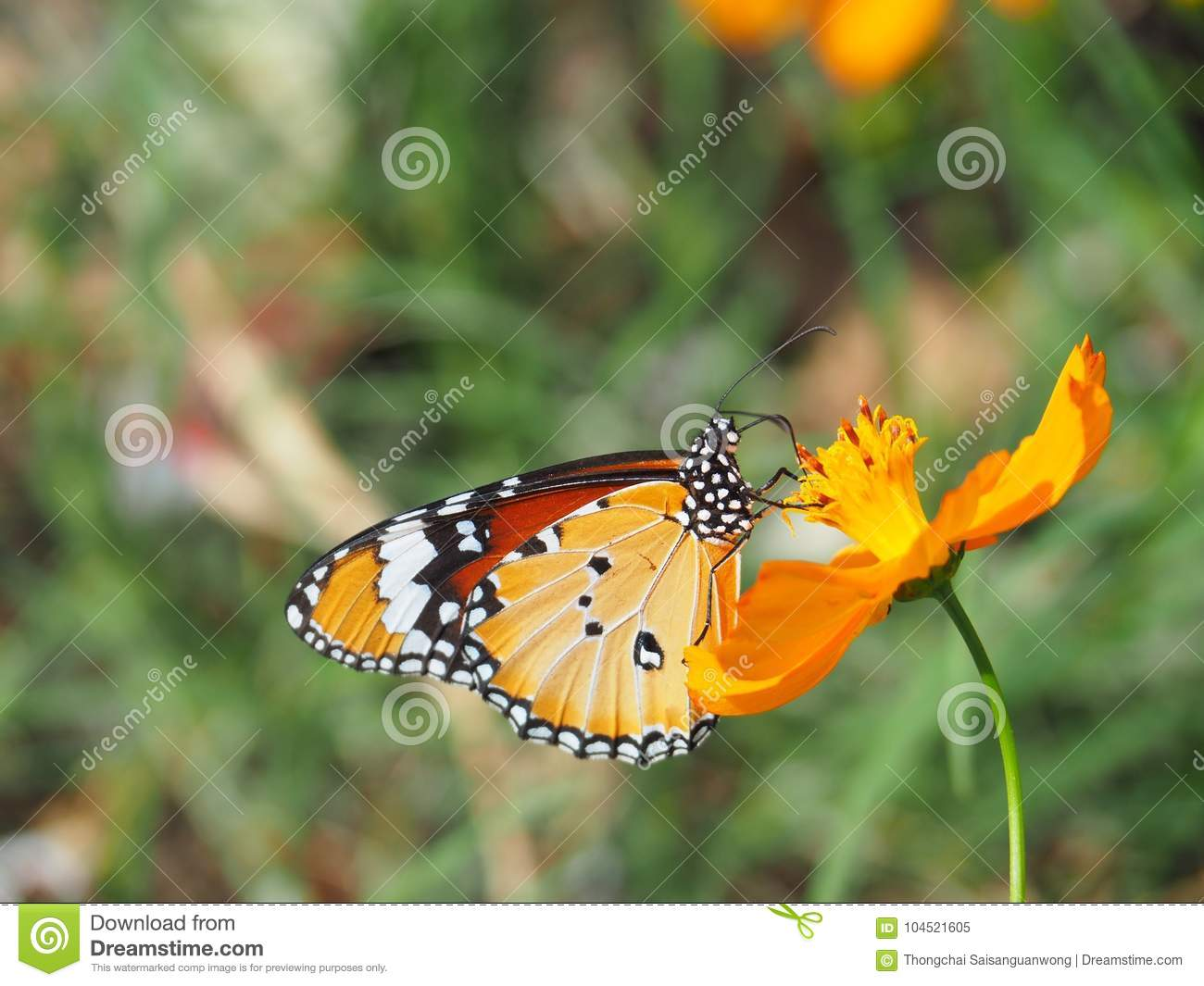Beautiful butterfly sucking on sweet and sour flowers and sunshine royalty free stock photo biocorpaavc Images