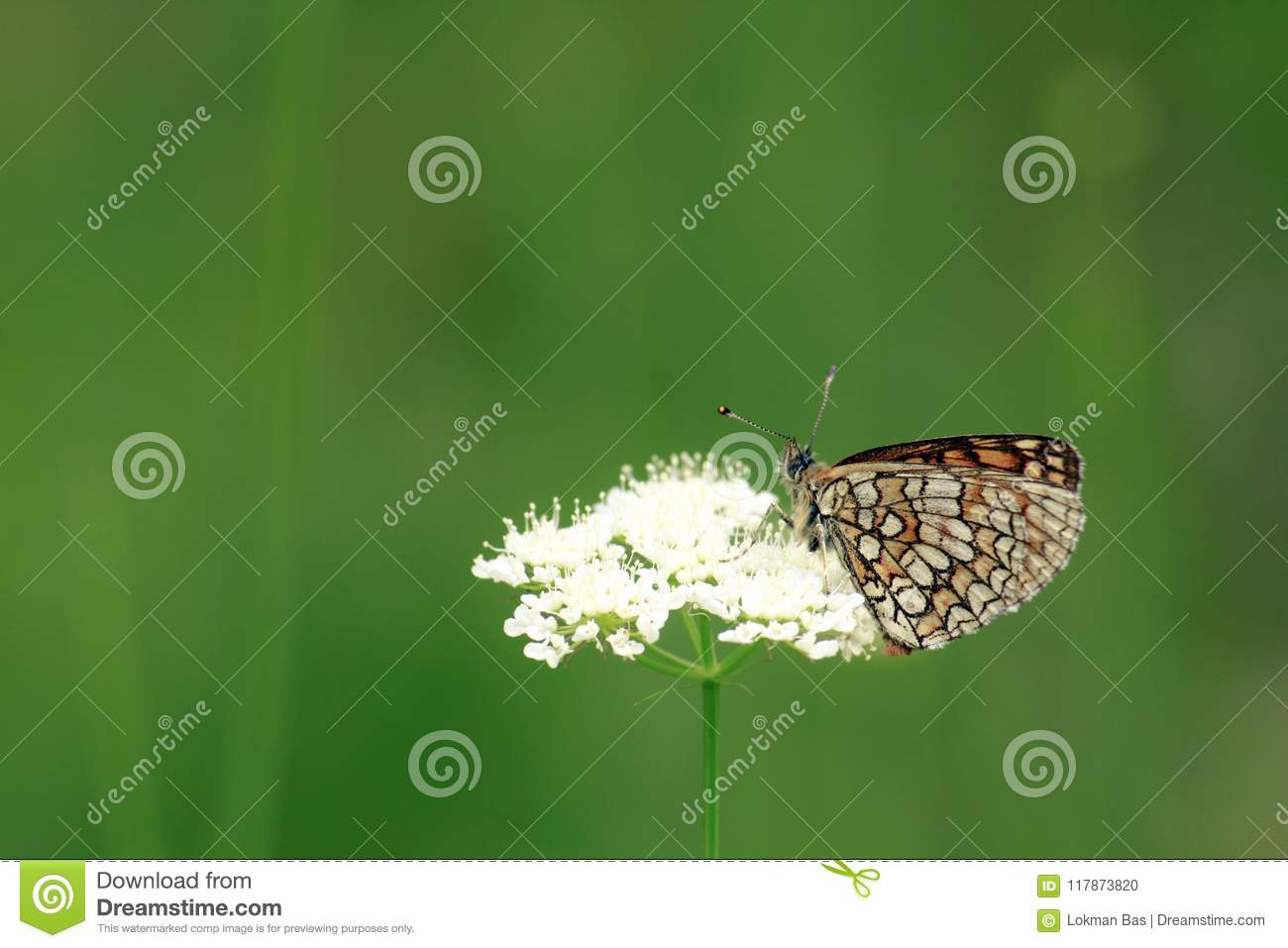 Beautiful Butterfly on White Flower