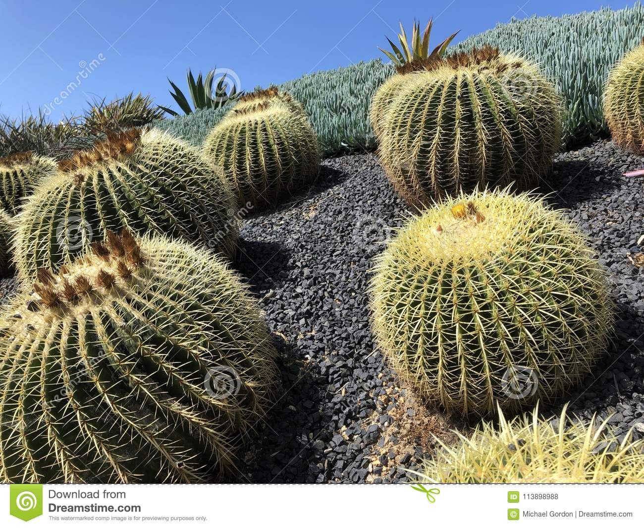 Confirm. cactus plants of southern california recommend you