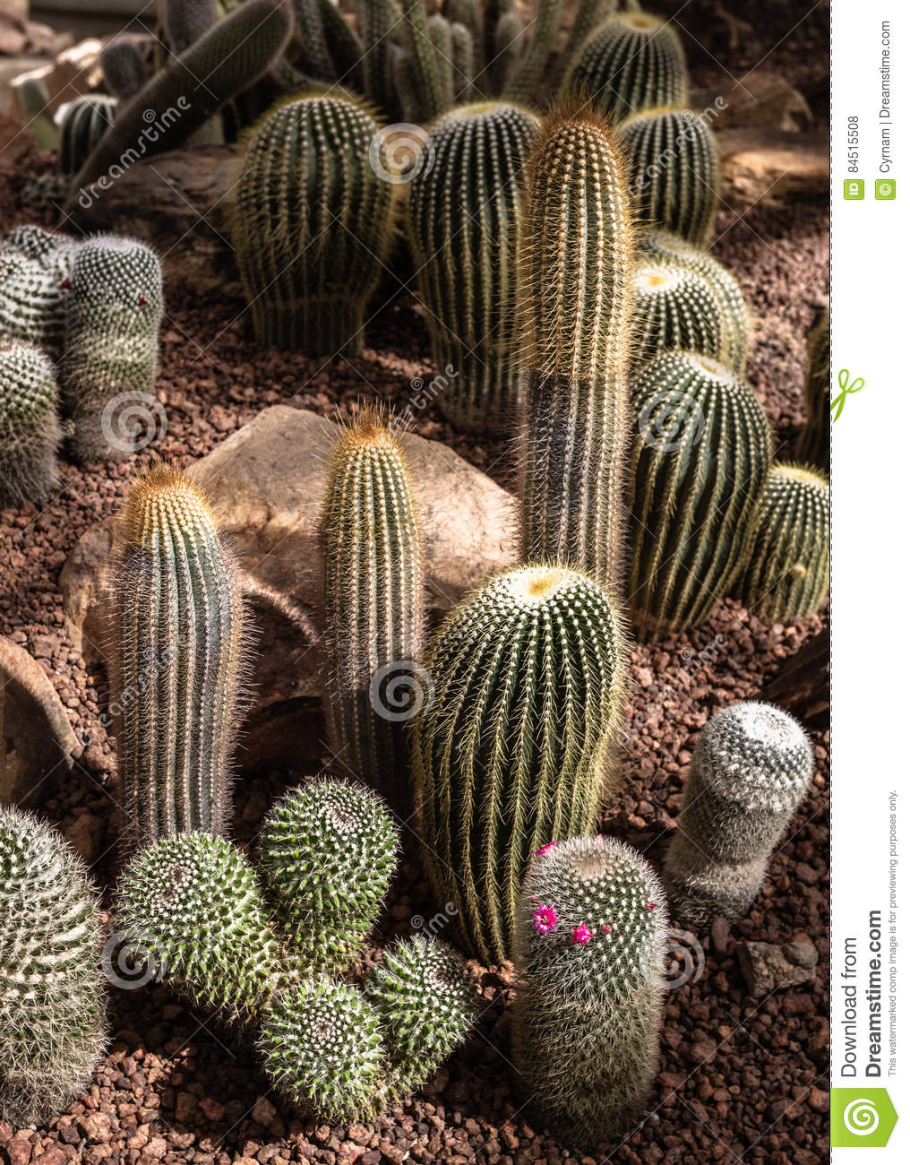 Beautiful cactus collection in botanical garden