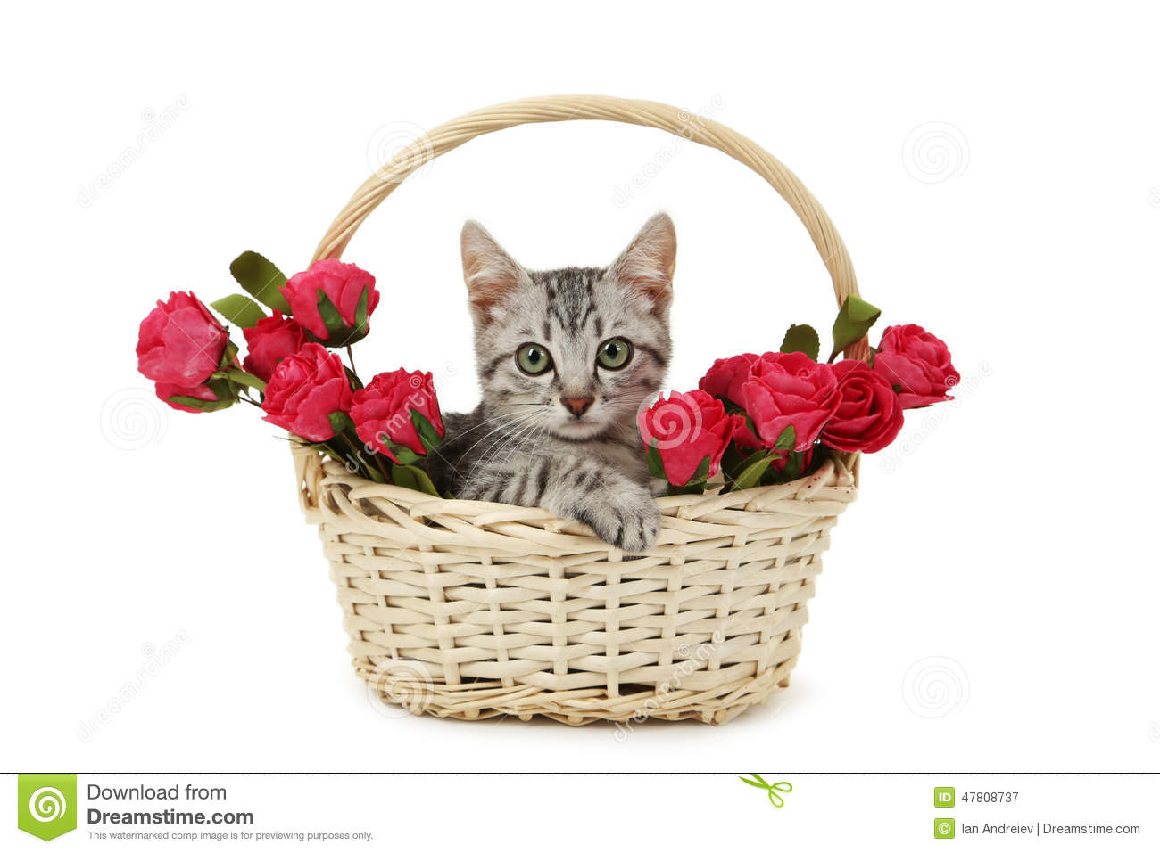 Beautiful Cat In Basket With Flowers Isolated On White Background