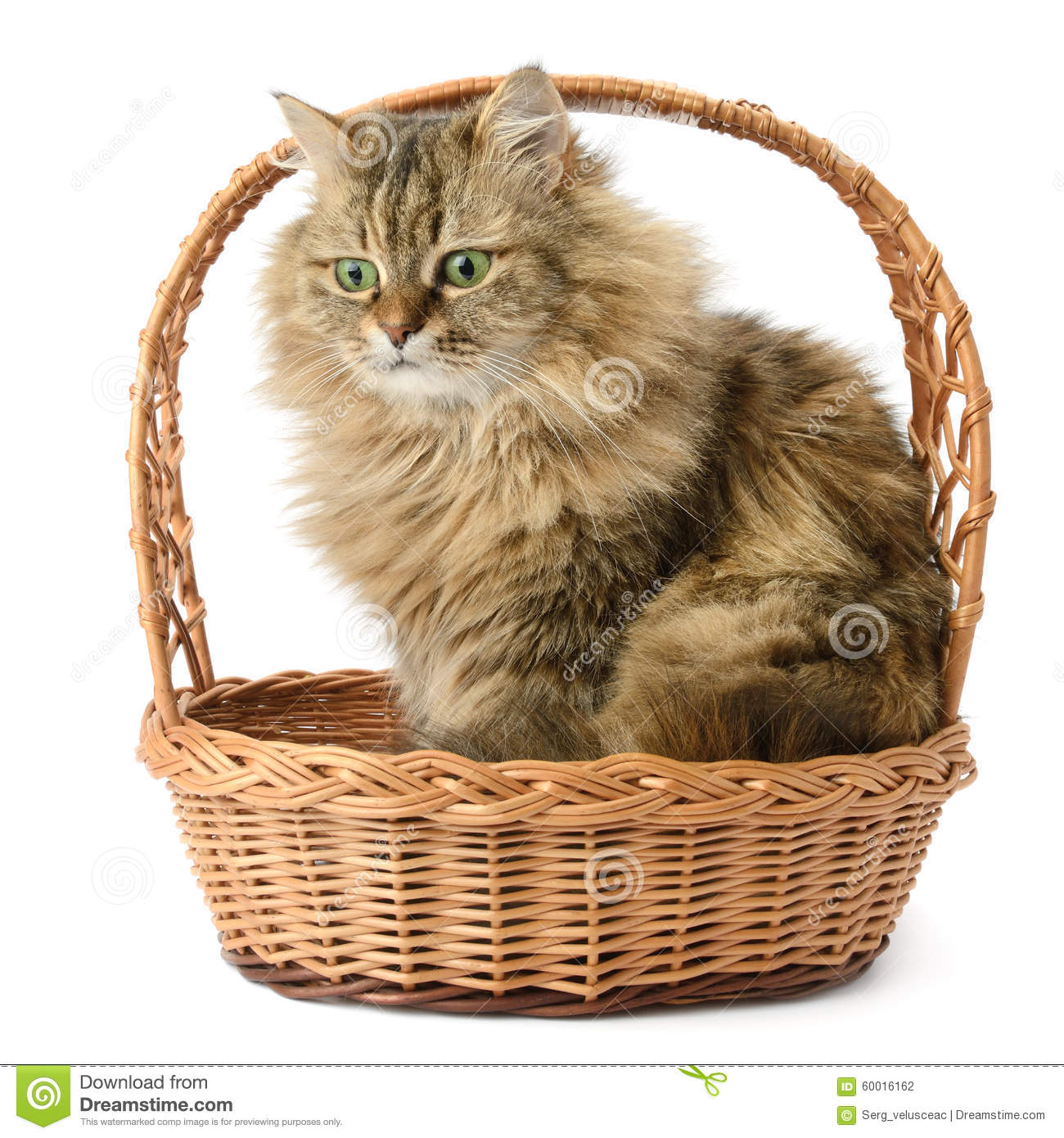 Beautiful Cat In Basket Stock Photo - Image: 60016162 Tabby Cat Sitting Up