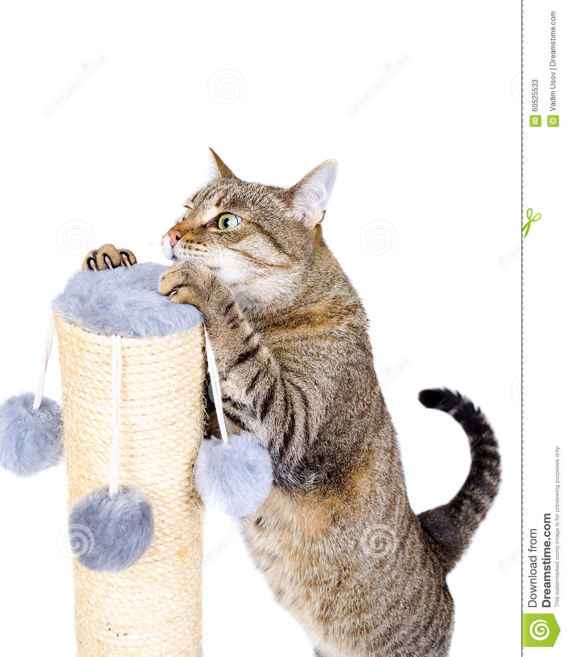 Beautiful cat with scratching post