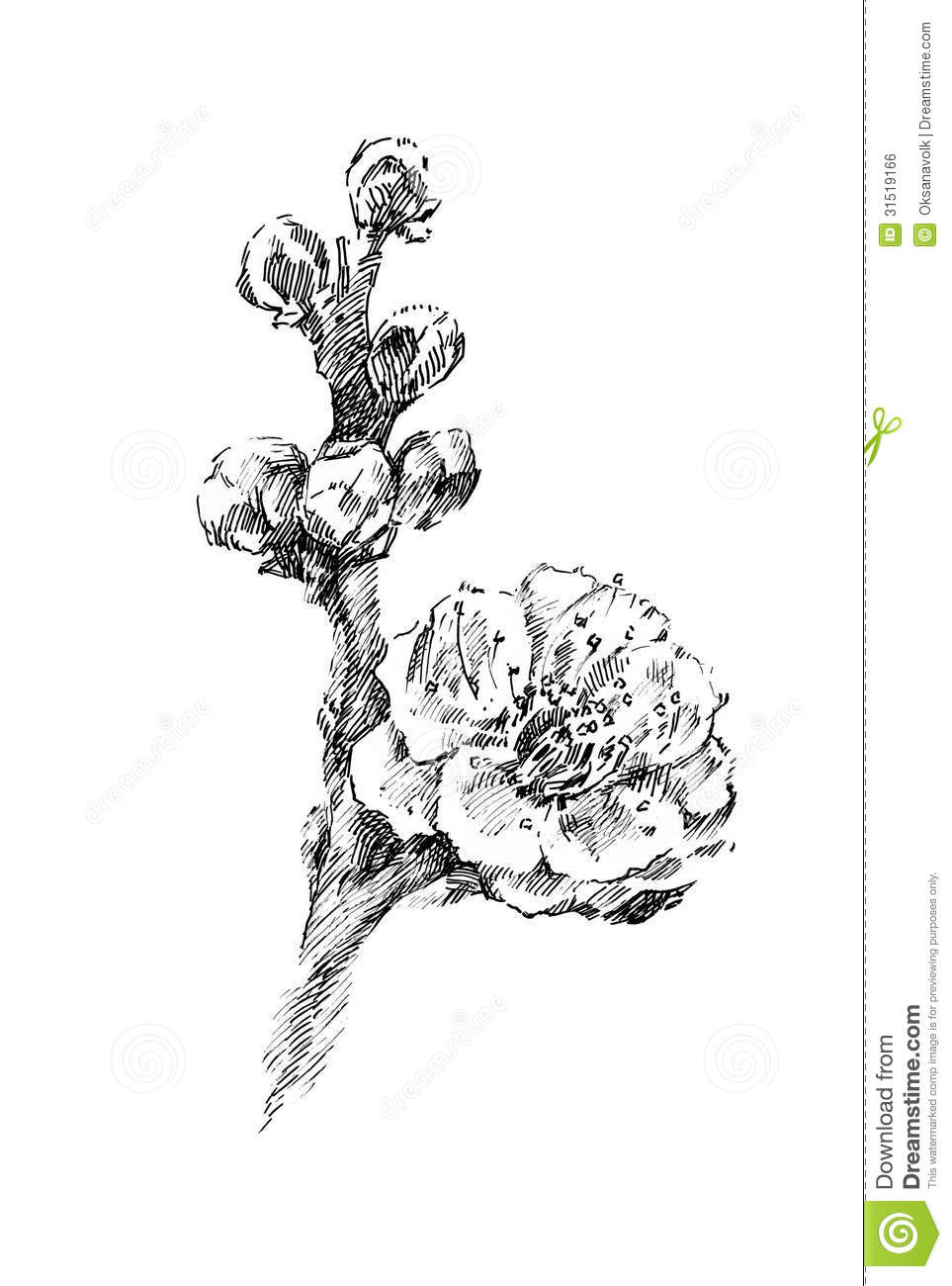 Decorative Ornament Vector 3599396 in addition Magnolia Blossoms Drawing Gm522618517 50902818 as well Stock Photos Detailed Victorian Floral Frame Image5580483 further Royalty Free Stock Image Beautiful Cherry Tree Flower Blooming Illustration Sketch Graphic Black White Ink Image31519166 furthermore Flower Rose Outline Clipart. on stock illustration branch with flowers vector black