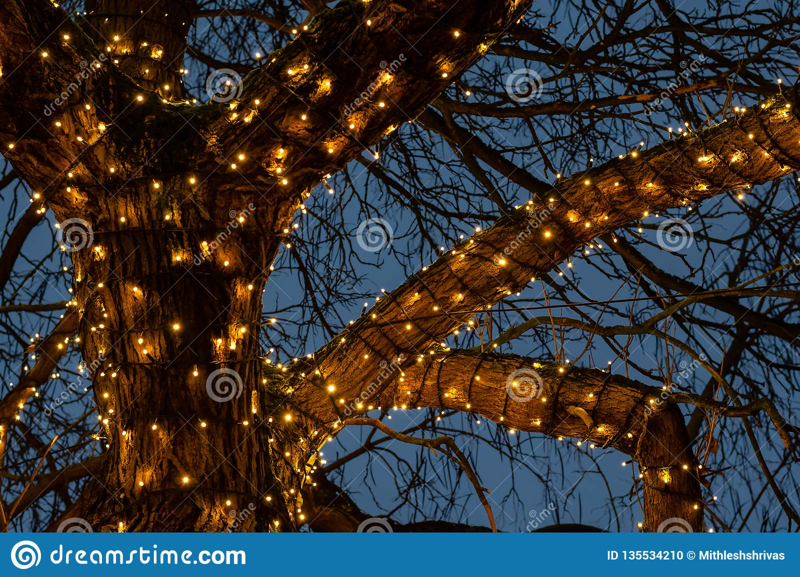 Beautiful Christmas lights around a tree branches against the light blue sky background in night