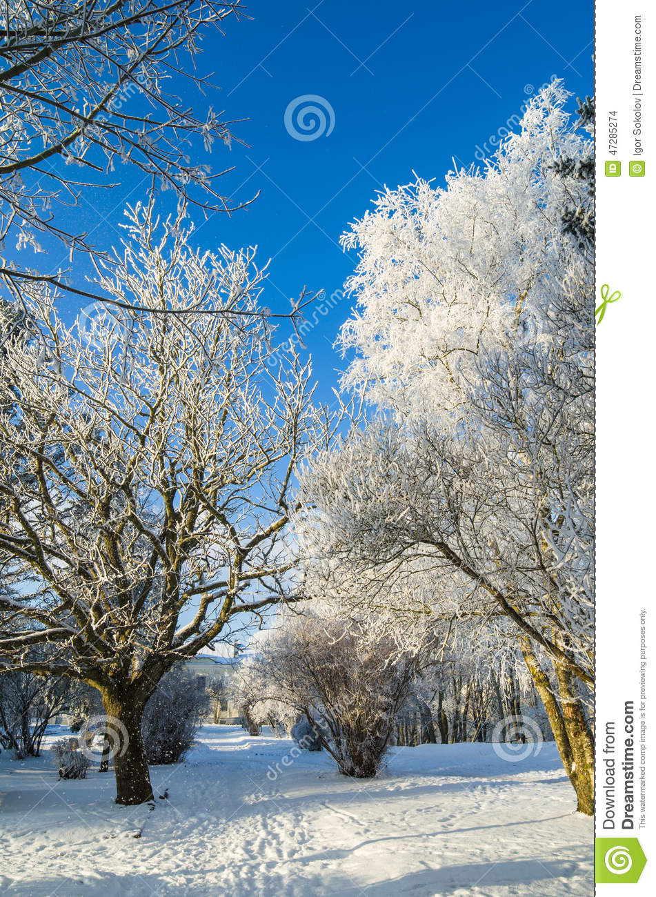 Beautiful Winter Outfit Www Pinterest Com: Beautiful Winter Scenery With Fresh Snow And Trees In A
