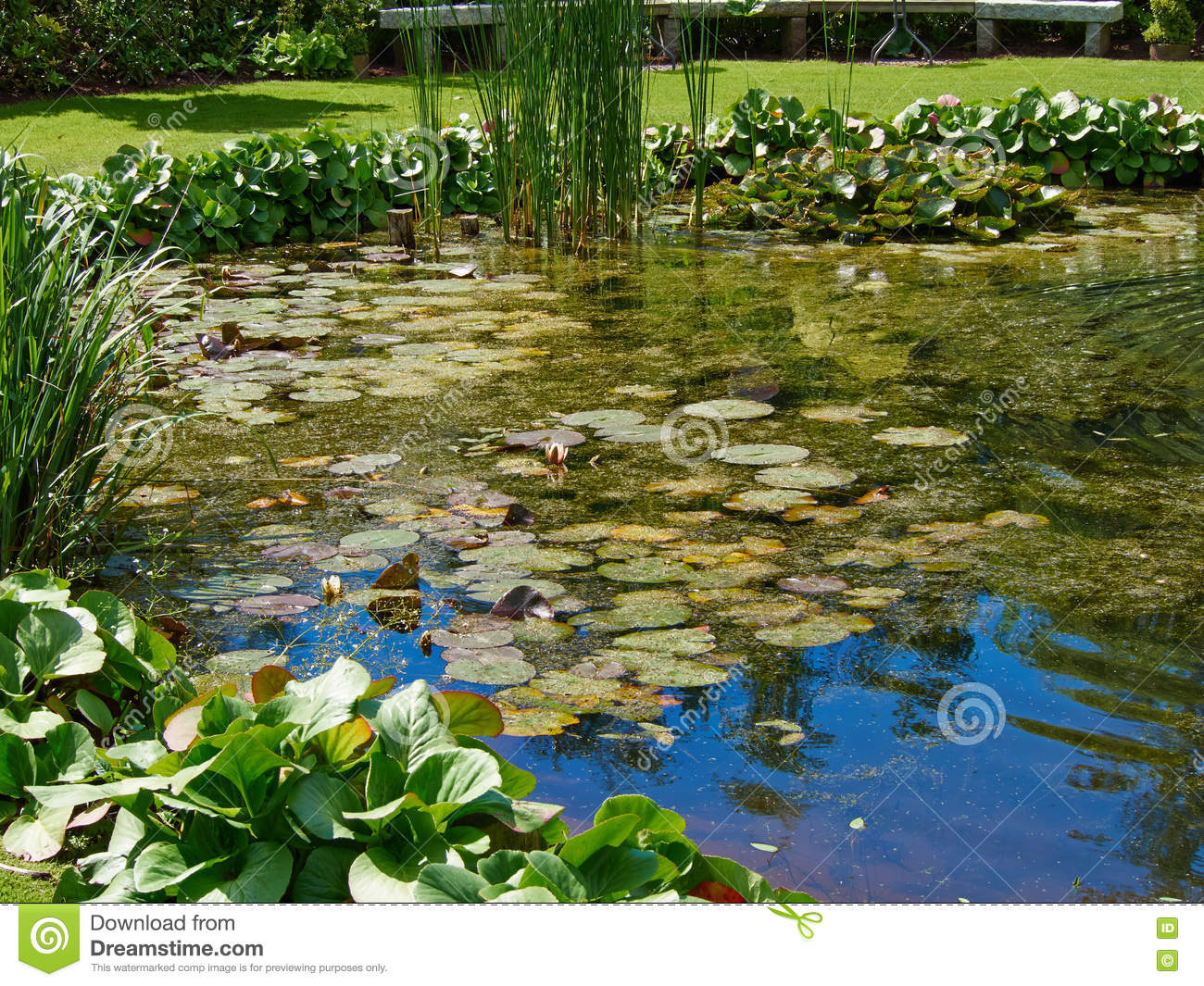3d design for pond scene with two crocodiles cartoon for Garden pond design software free download