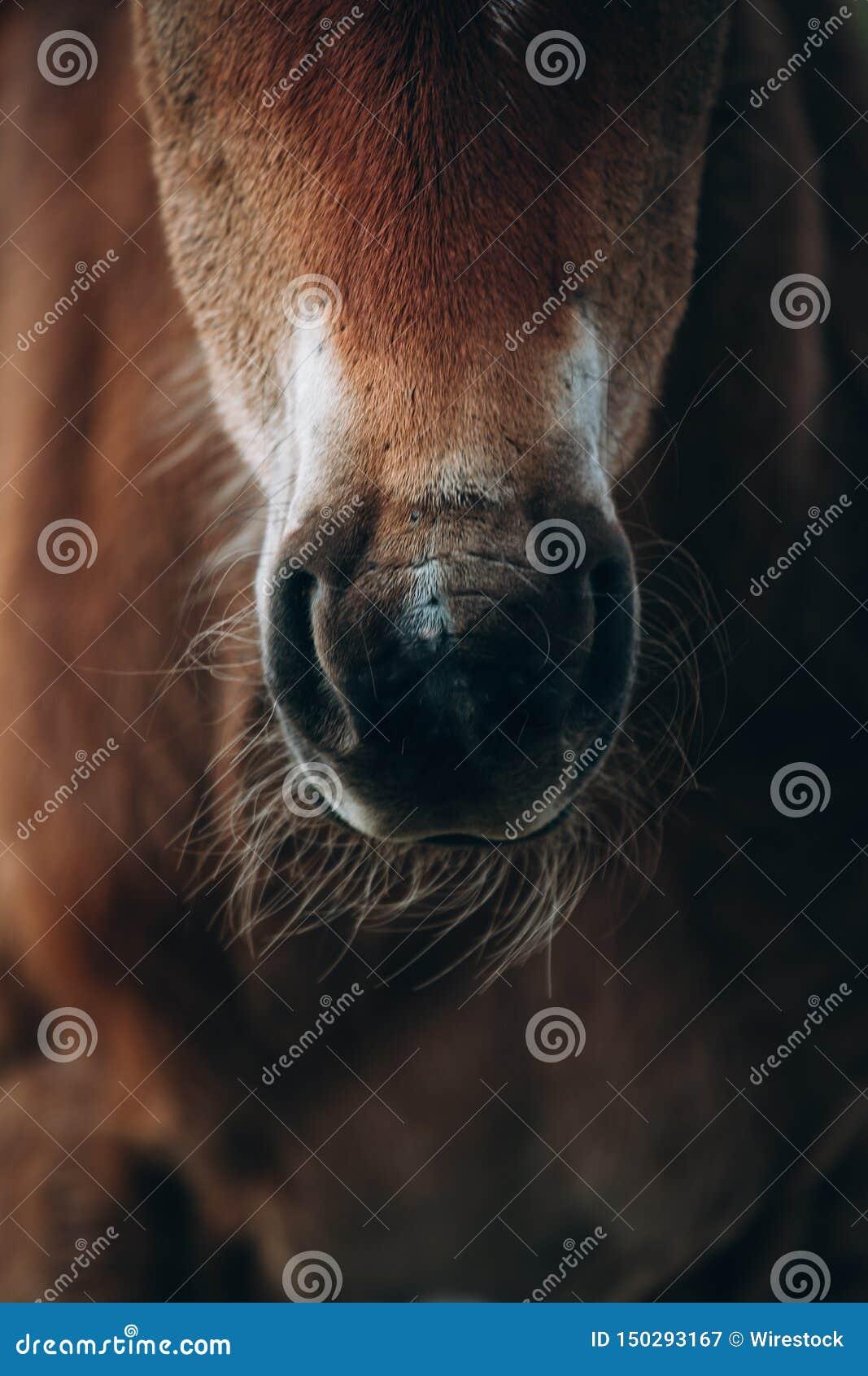 Beautiful closeup shot of a brown horse