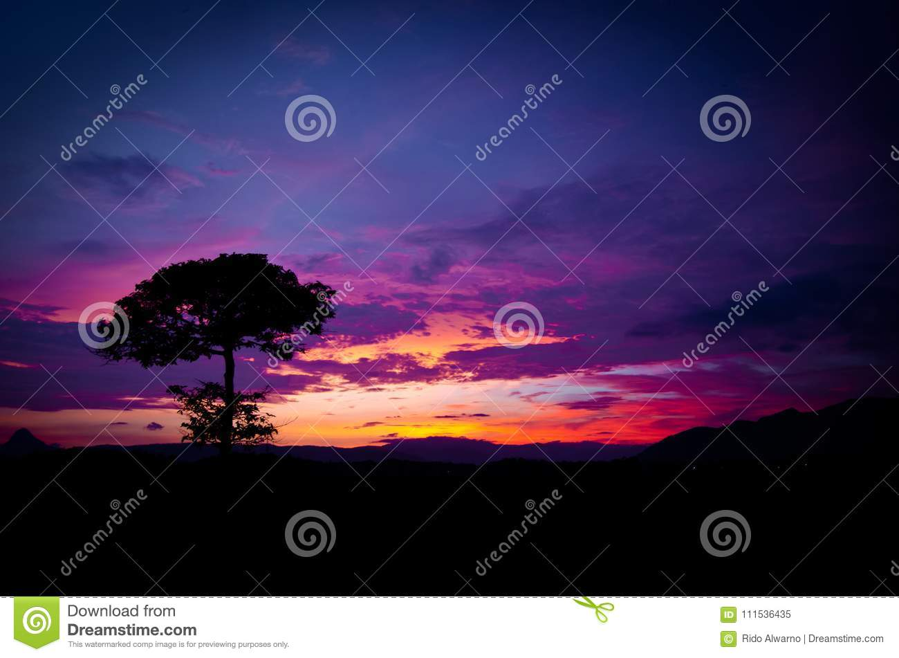 Beautiful color of sky sunset and alone tree