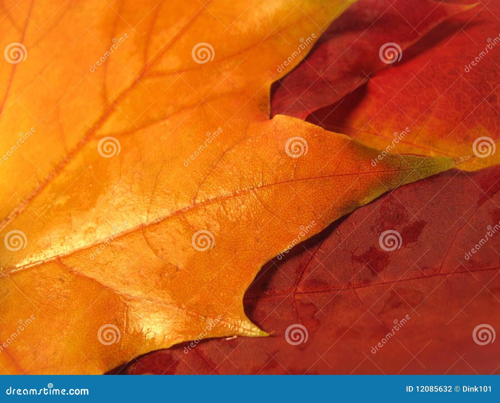 Beautiful colored fall leaves