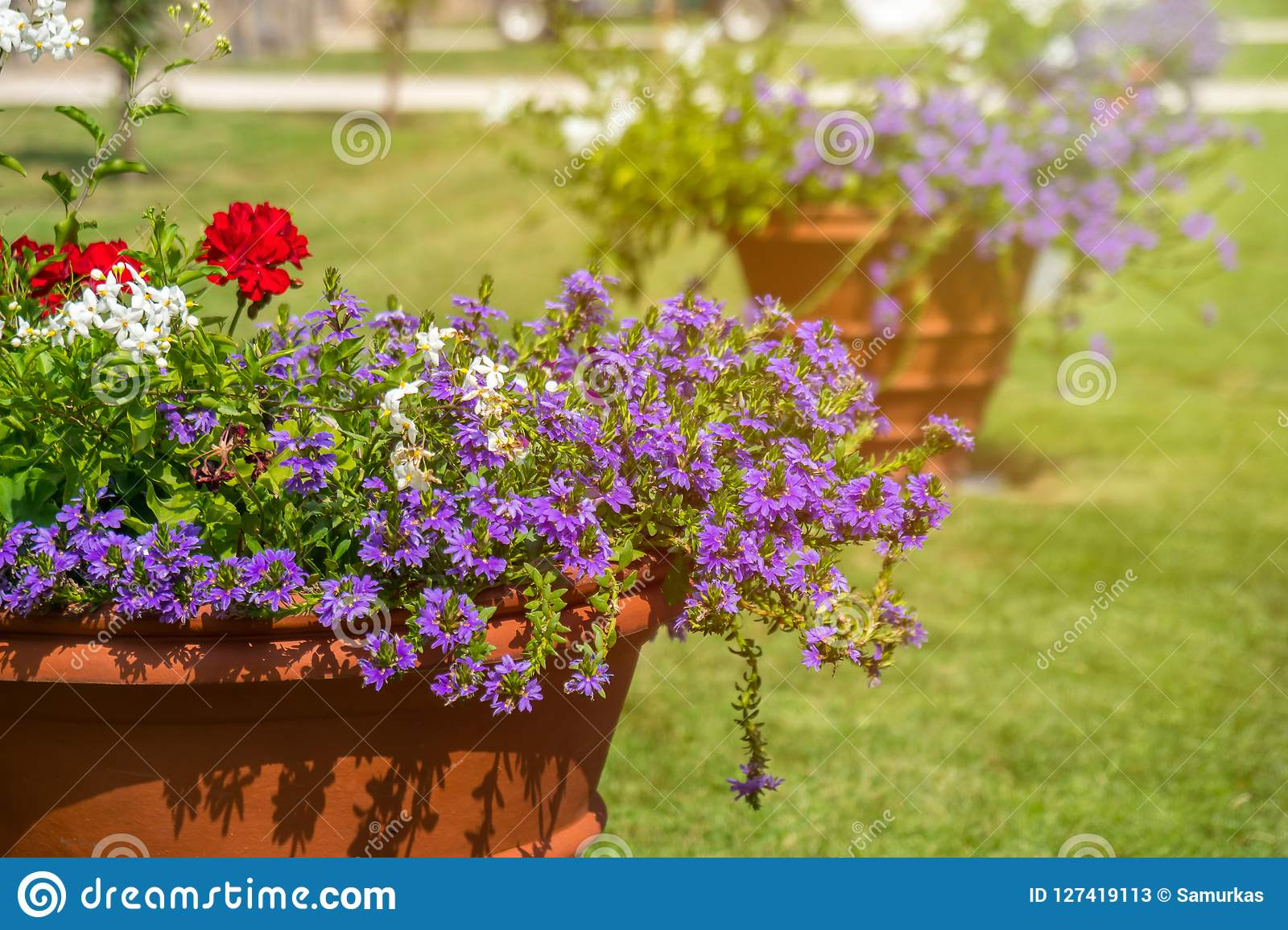 Beautiful Colored Potted Flowers In A Park On A Sunny Day Stock