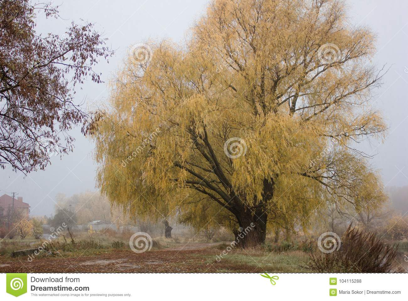 outdoor nature photography. Royalty-Free Stock Photo Outdoor Nature Photography O