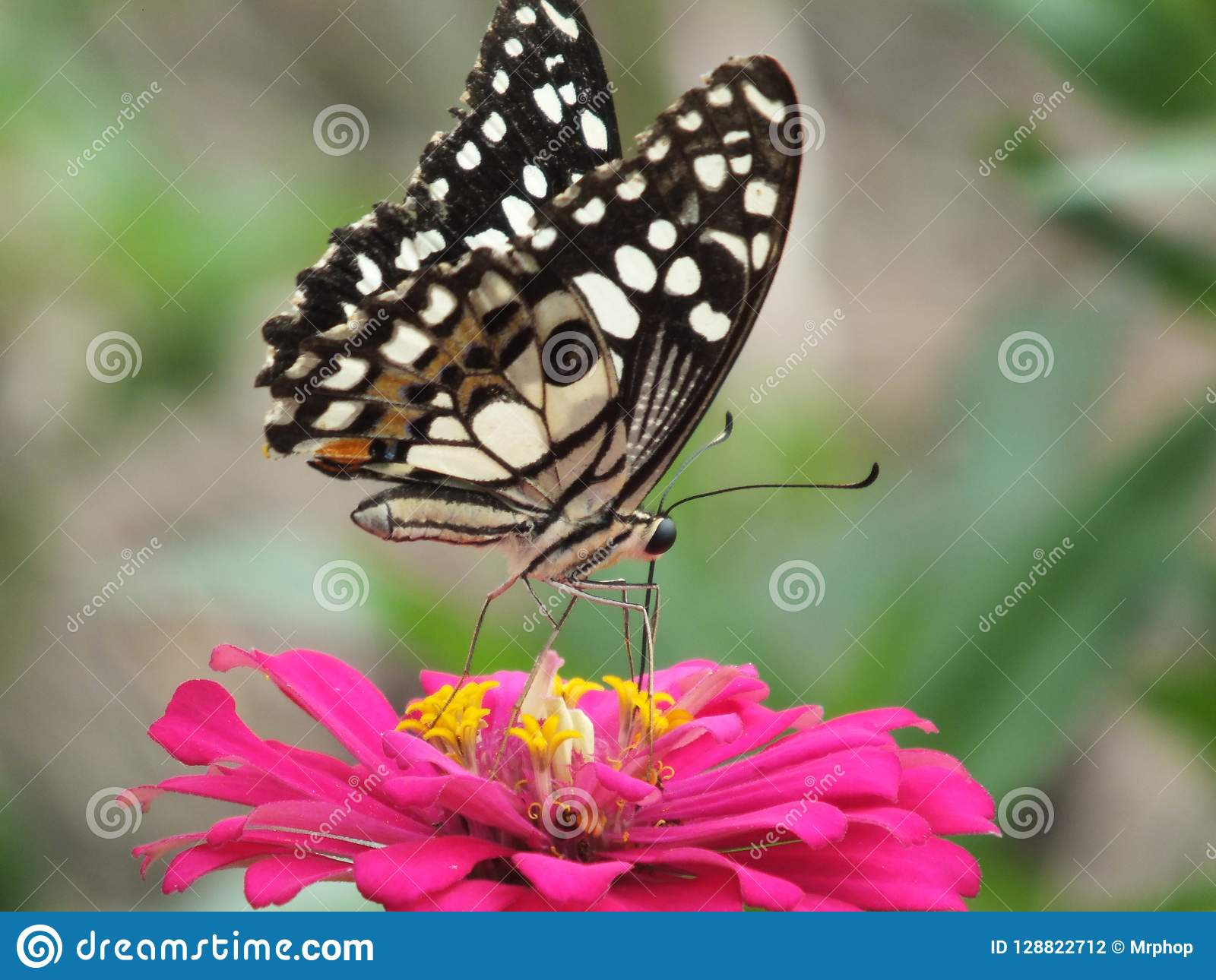 Beautiful Colorful Butterfly Backgrounds Stock Photo Image Of