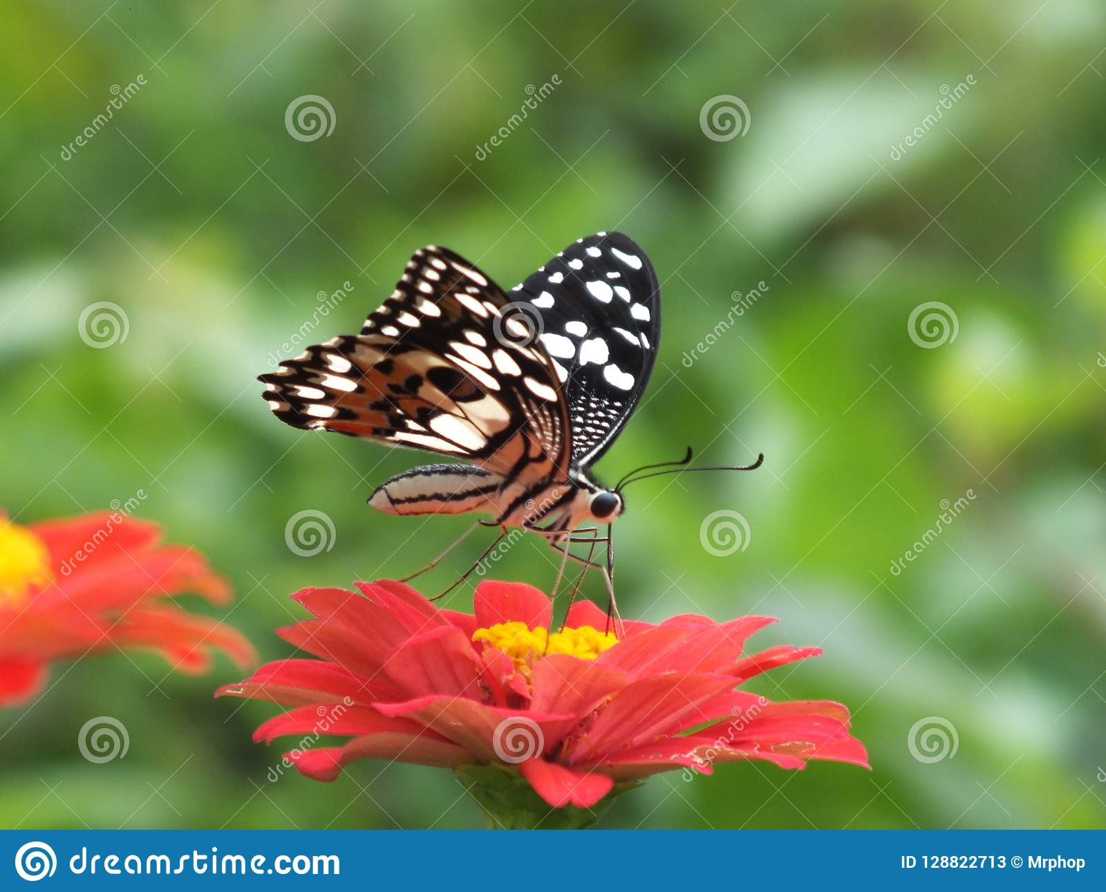 Beautiful Colorful Butterfly Backgrounds Stock Image Image Of