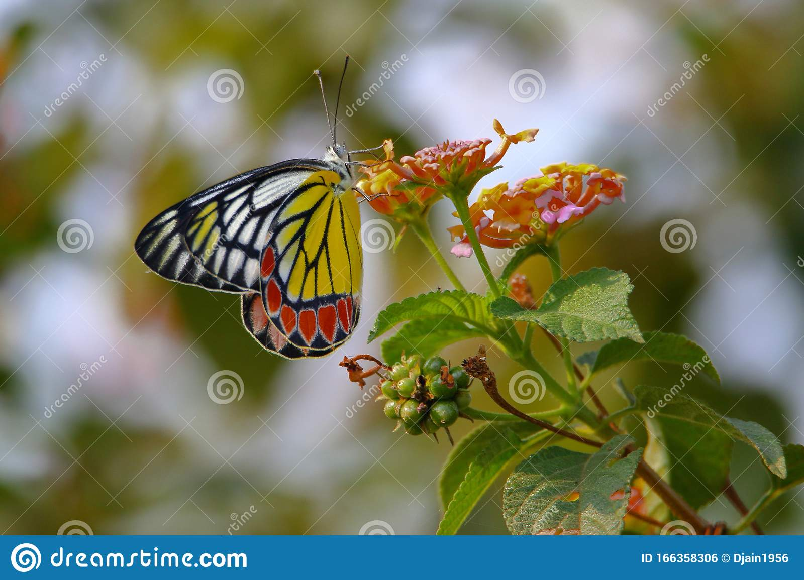 Butterfly Insects Natural Nature Wallpaper Stock Photo Image
