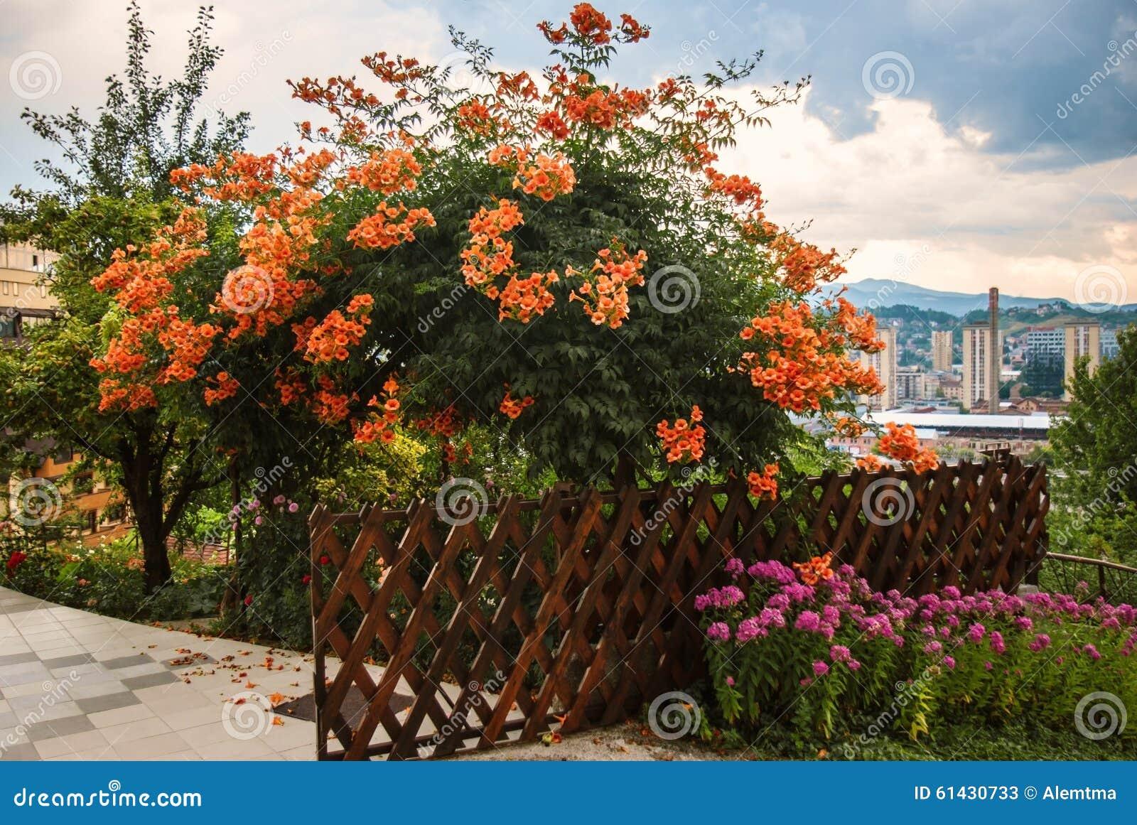 Backyard Summer Background :  images of ` Beautiful colorful flower bush backyard urban background