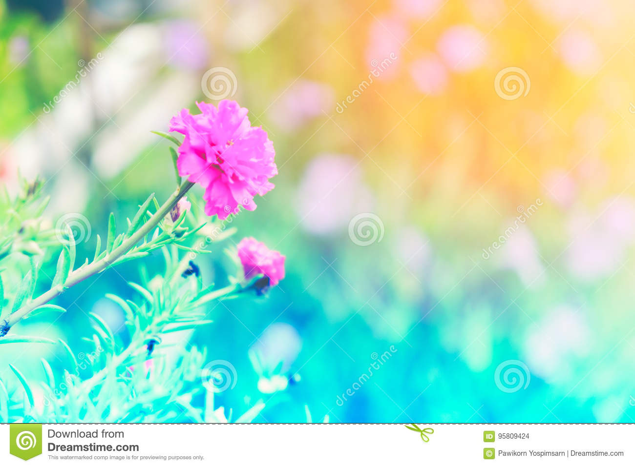 Beautiful Colorful Flower In Pastel Vintage And Retro Style With Blur Background Stock Photo Image Of Amazing Background 95809424