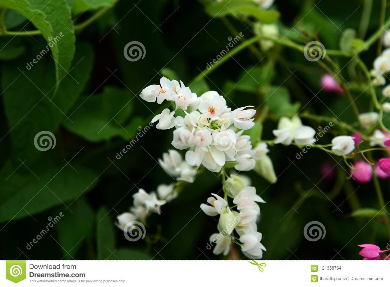 Beautiful Colorful Flowers At The Garden Stock Photo Image Of