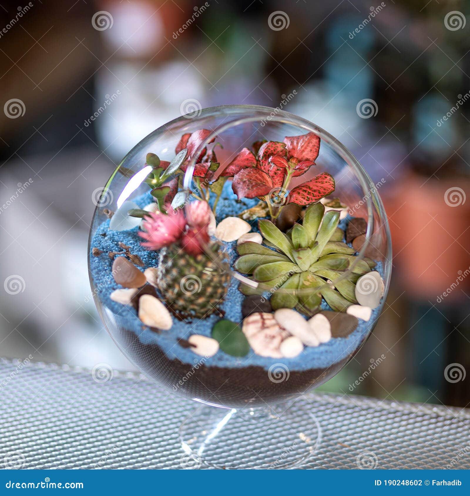 Beautiful Colorful Glass Terrarium With Succulent Stock Photo Image Of Lizard Jungle 190248602