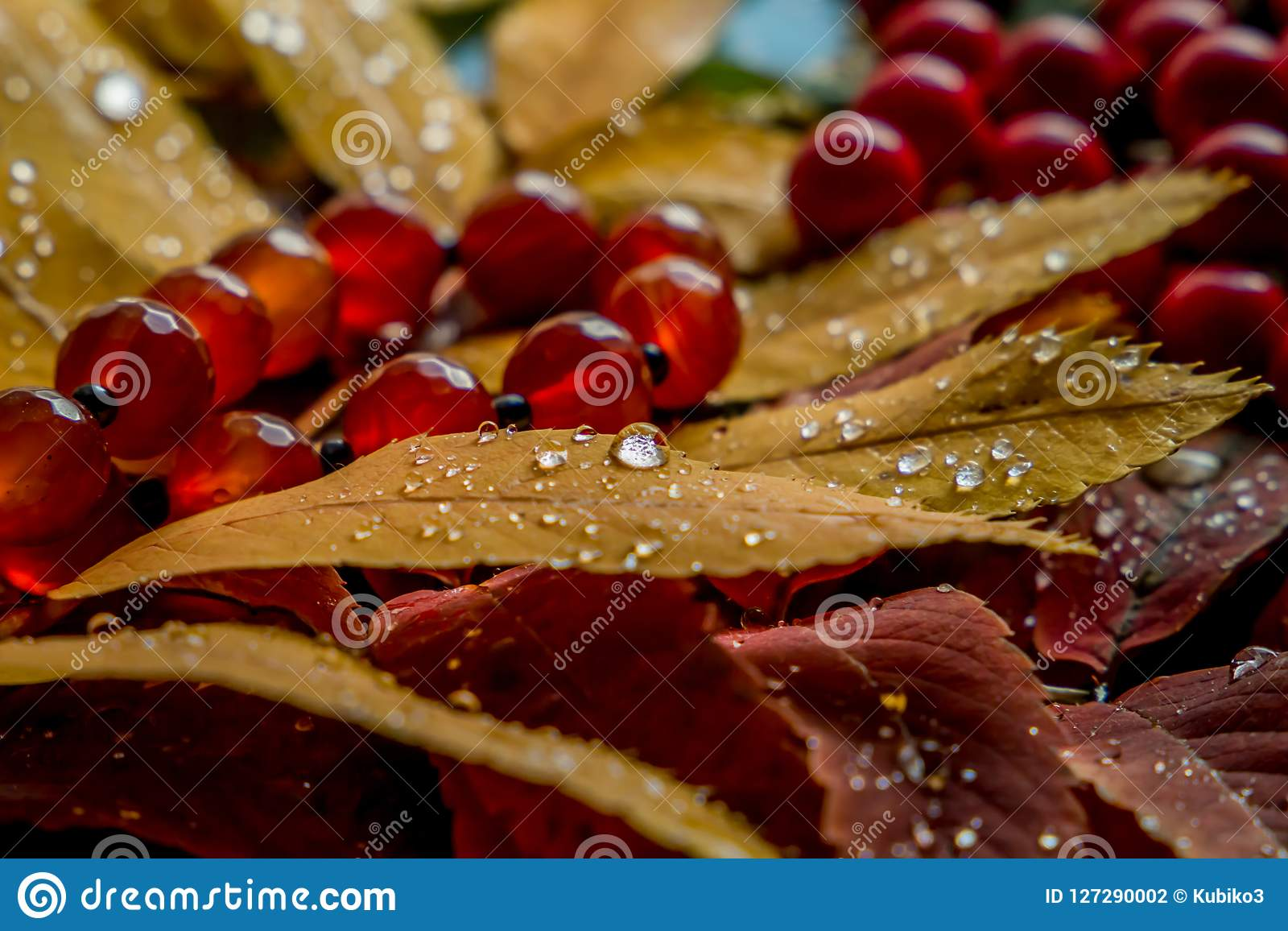 Beautiful composition of wet mountain ash leaves