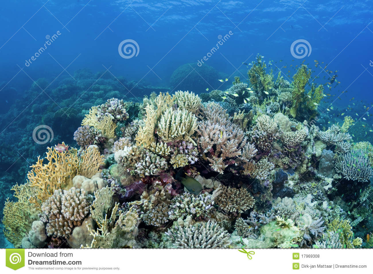 beautiful colorful coral reefs - photo #29