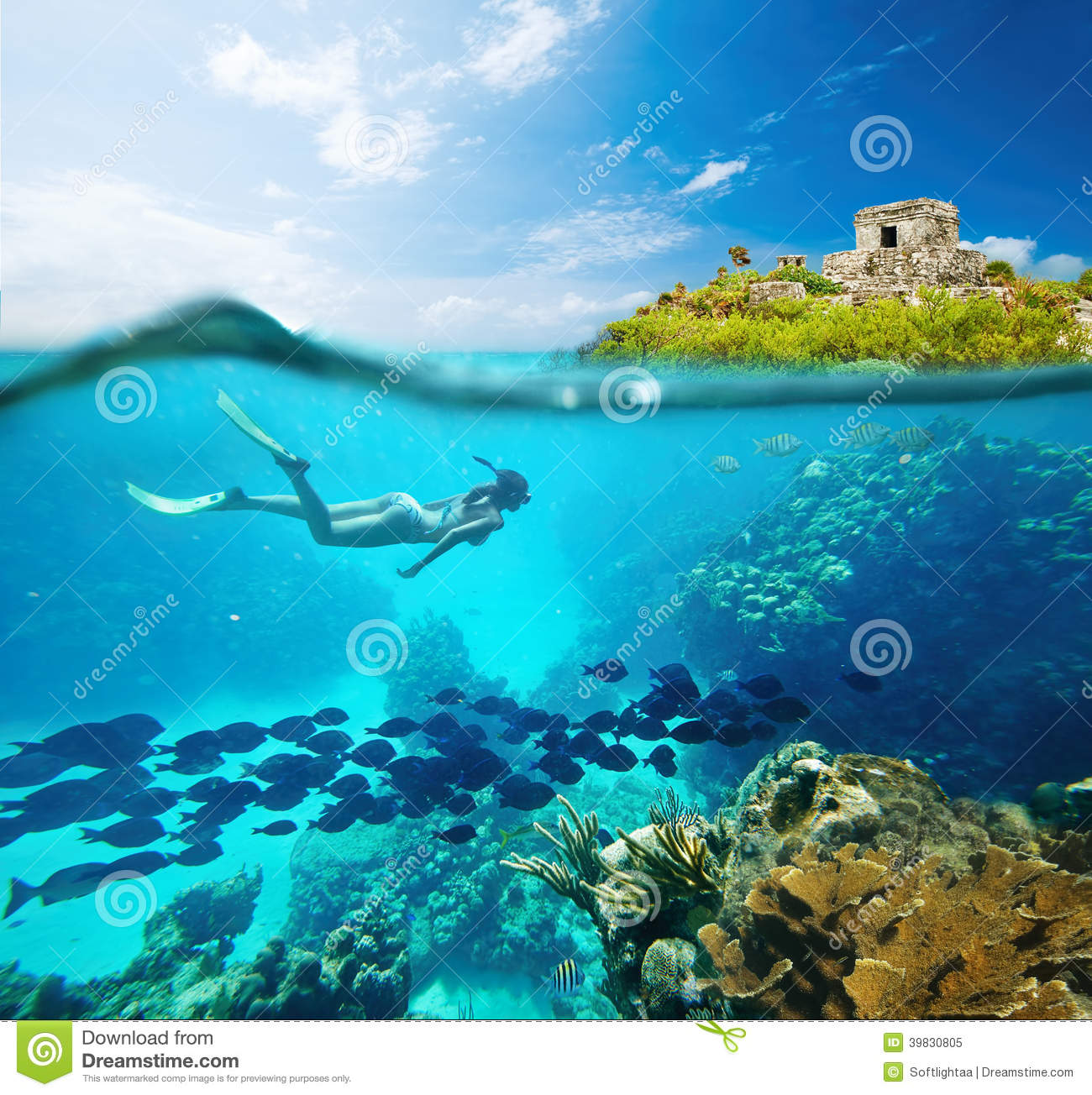 Beautiful coral reef with lots of fish and a woman stock for Lot of fish