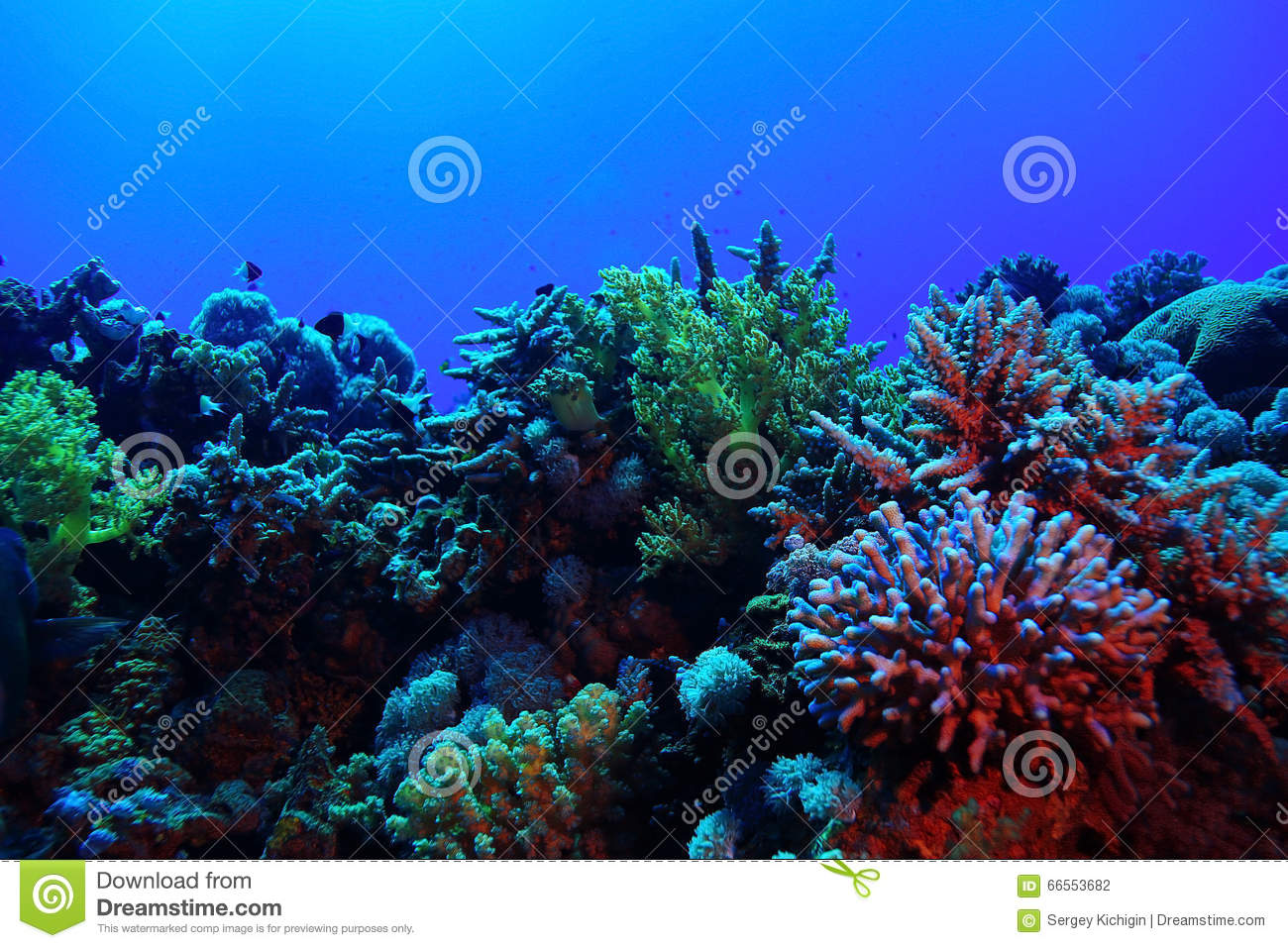 Beautiful coral reef stock photo. Image of coral, bunaken ...