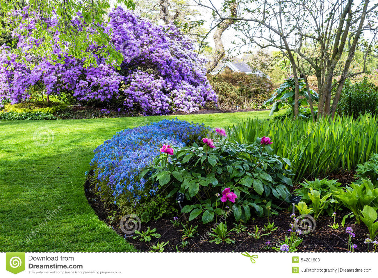 Beautiful Corydalis Flexuosa In Full Bloom In The Botanic Garden In Spring Stock Photo Image