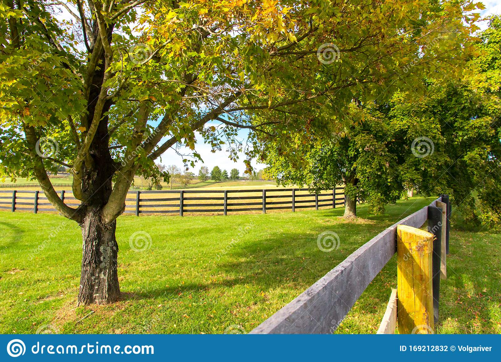 Beautiful Country Landscape With Colorful Tree And Pastures Of Horse Farms Stock Photo Image Of Fence Beautiful 169212832