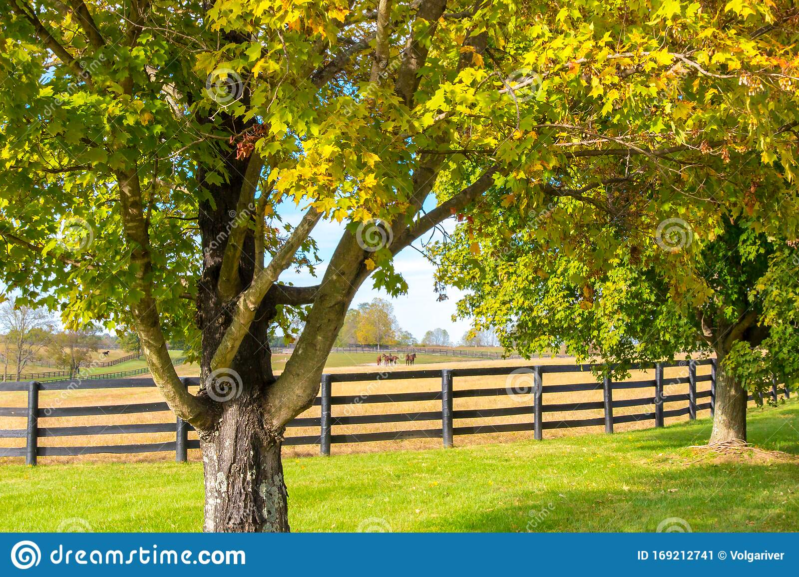 Beautiful Country Landscape With Colorful Tree And Pastures Of Horse Farms Stock Image Image Of Country Fence 169212741