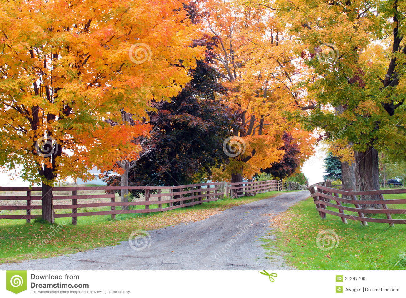 Beautiful Country Road In Autumn Foliage Stock Photo - Image: 27247700