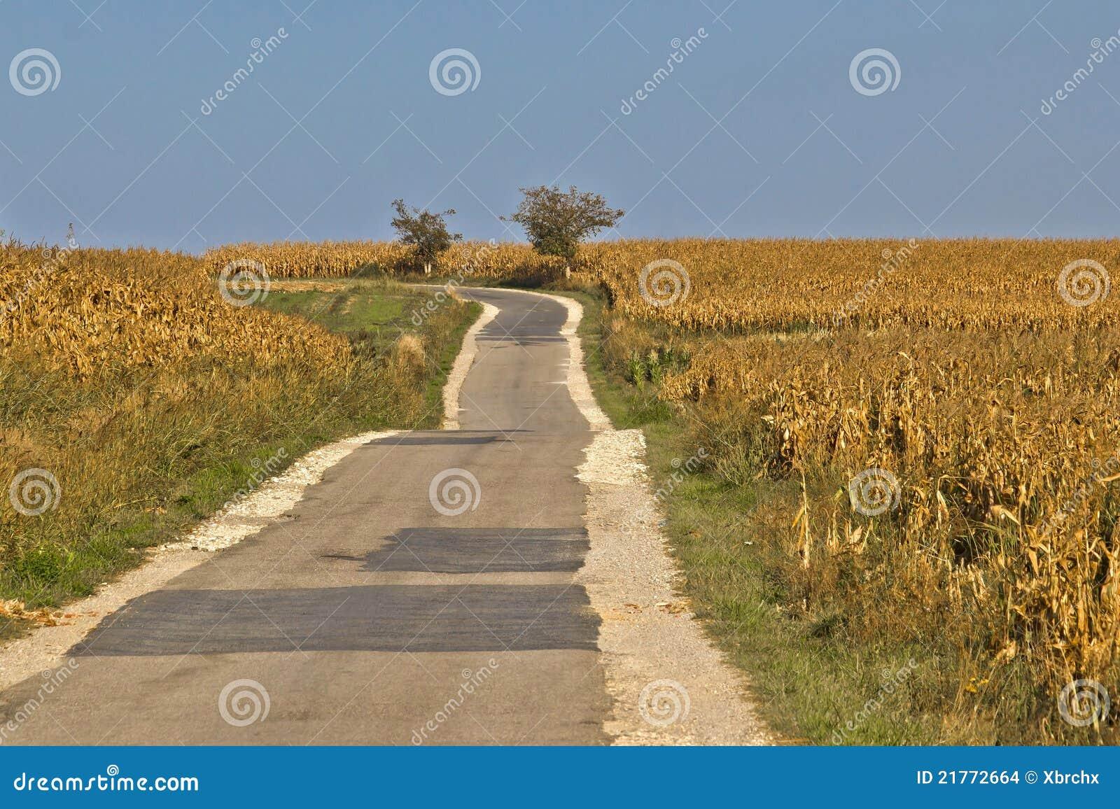 Beautiful countryside road through cornfields