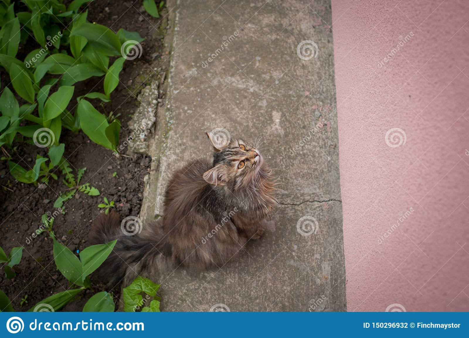 Beautiful cute cat sits and waits for food