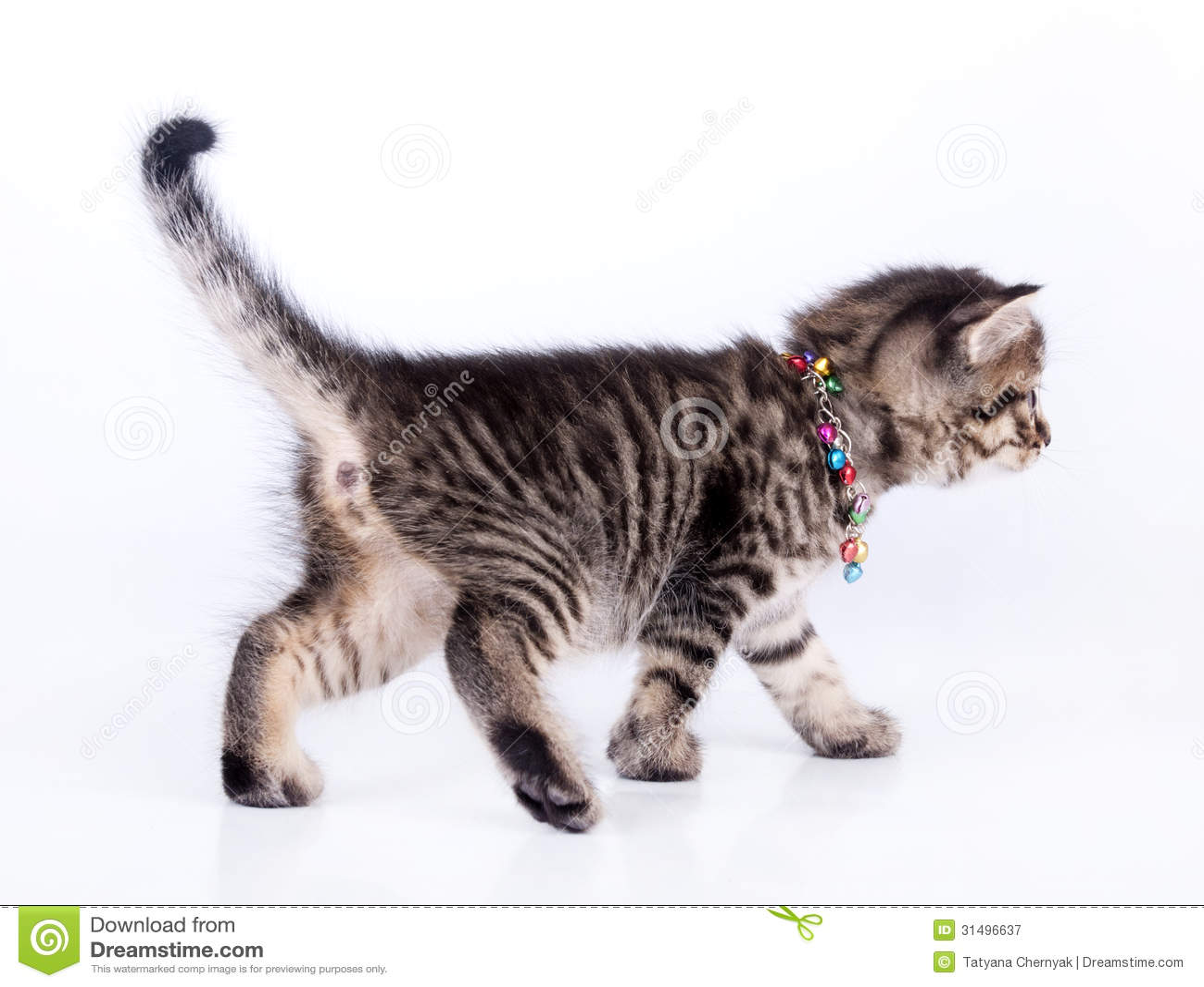 kitten adoption houston