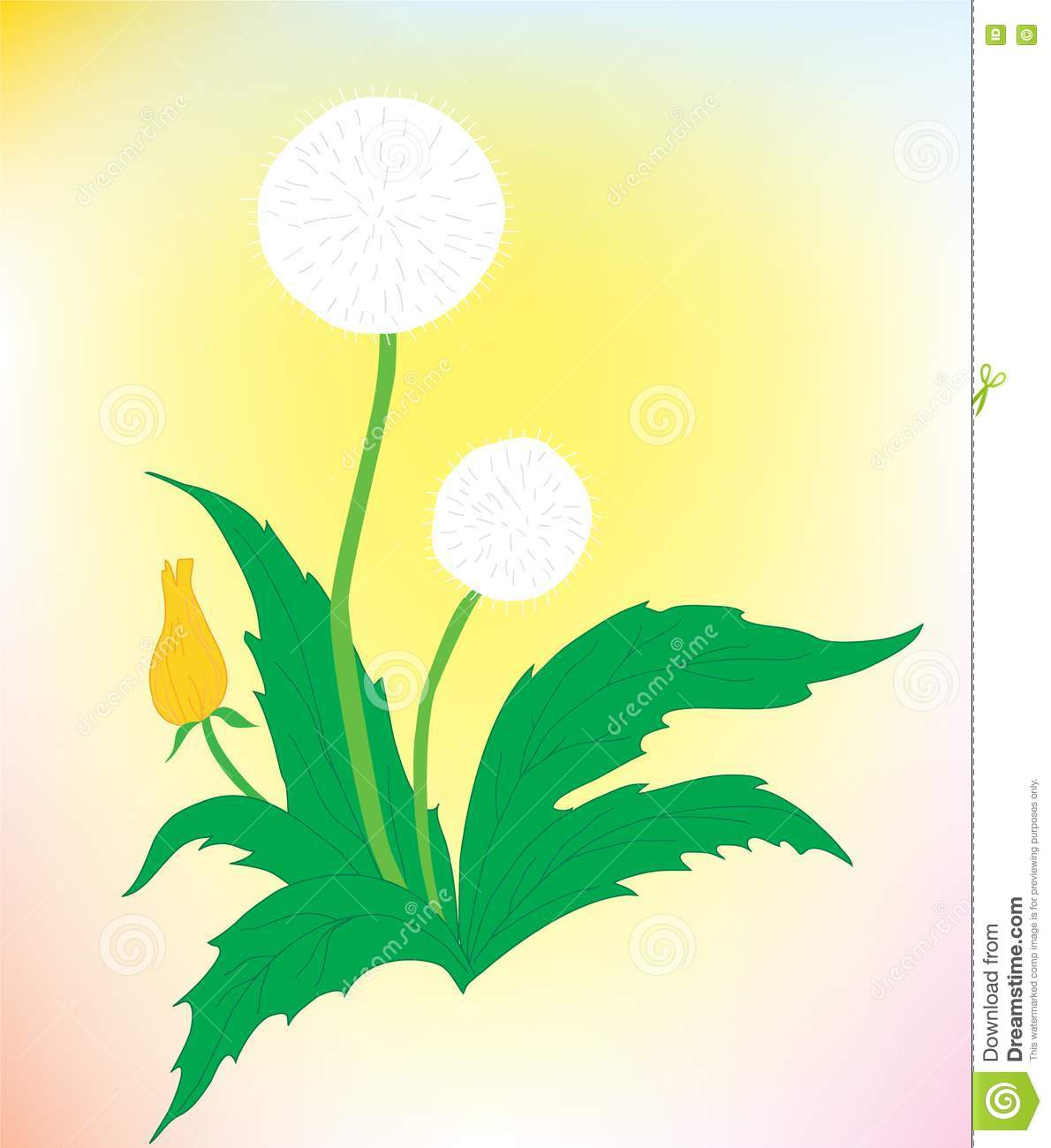 A Beautiful Dandelion On A Color Background Stock Vector