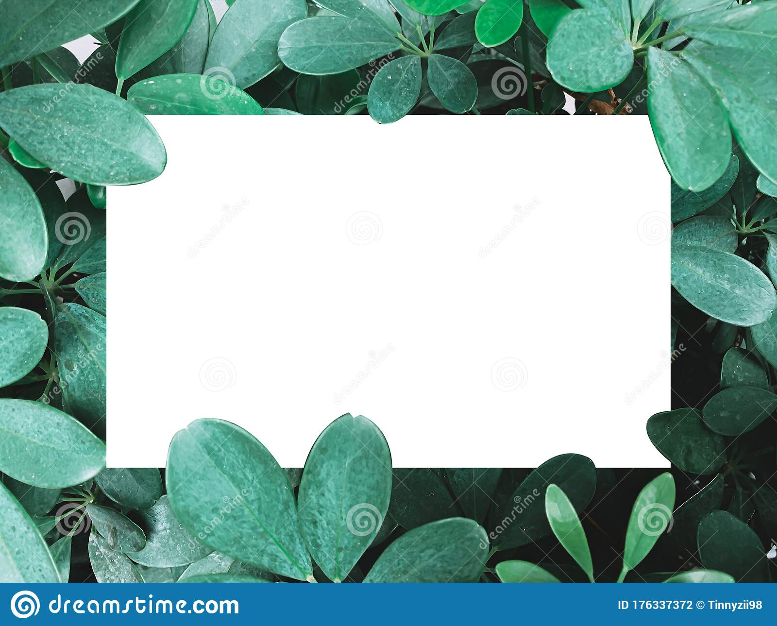 Beautiful Of Dark Green Leaves Background Or Wallpaper Stock Photo