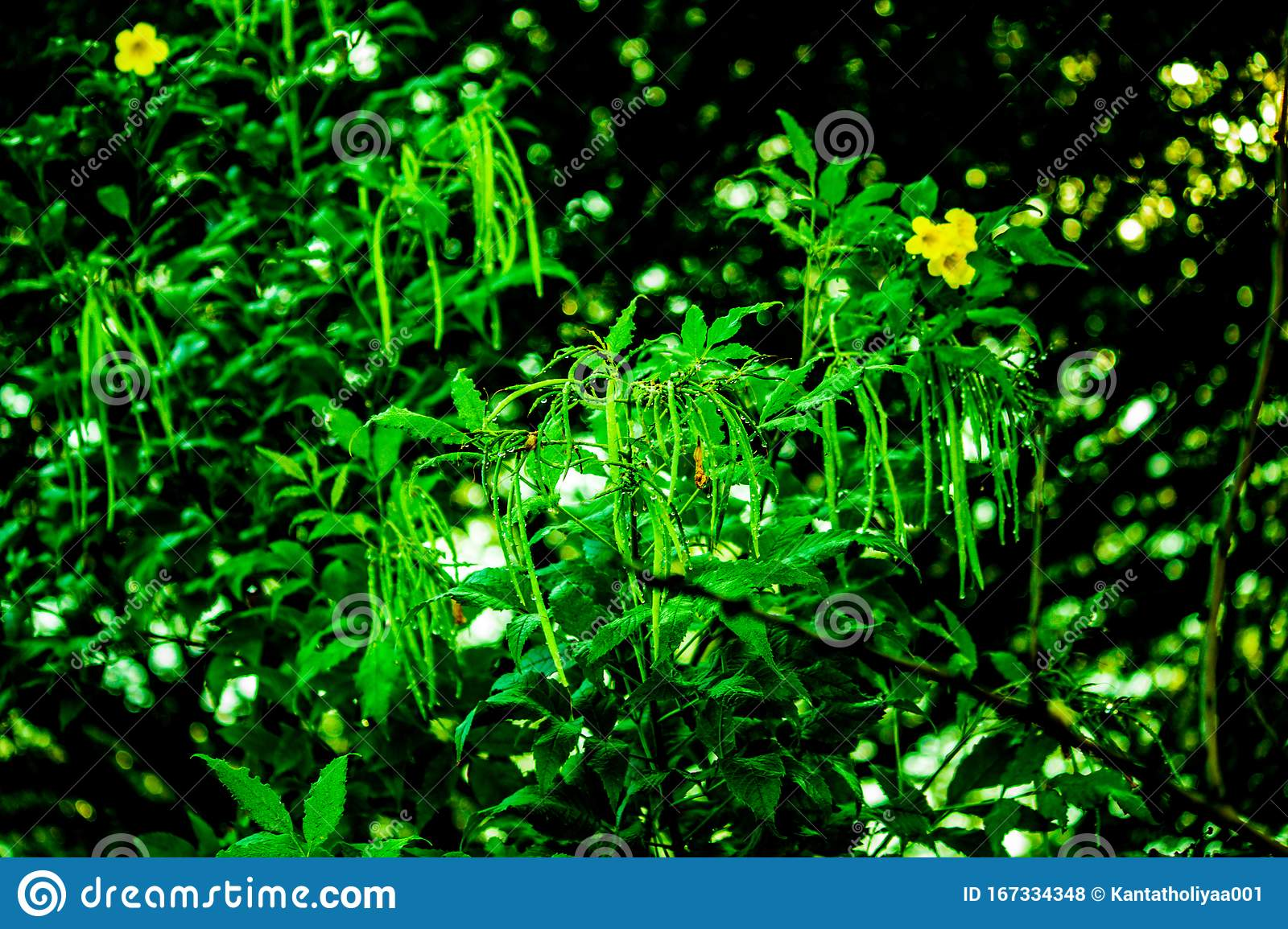 Beautiful Dark Green Plant With Yellow Flower Stock Photo Image Of Dark Background 167334348