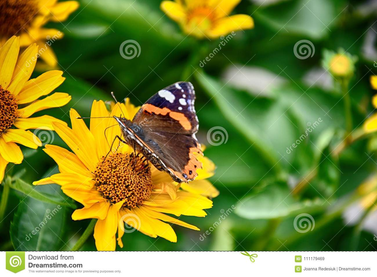 Dark yellow flowers growing on a green meadow and a butterfly o download dark yellow flowers growing on a green meadow and a butterfly o stock image mightylinksfo