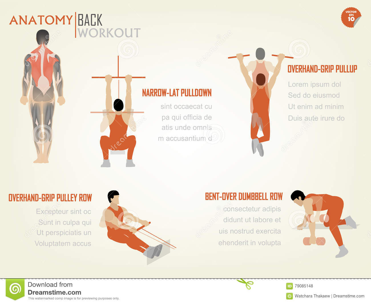 Beautiful Design Info Graphic Of Abdominal Back Workout Stock Vector ...