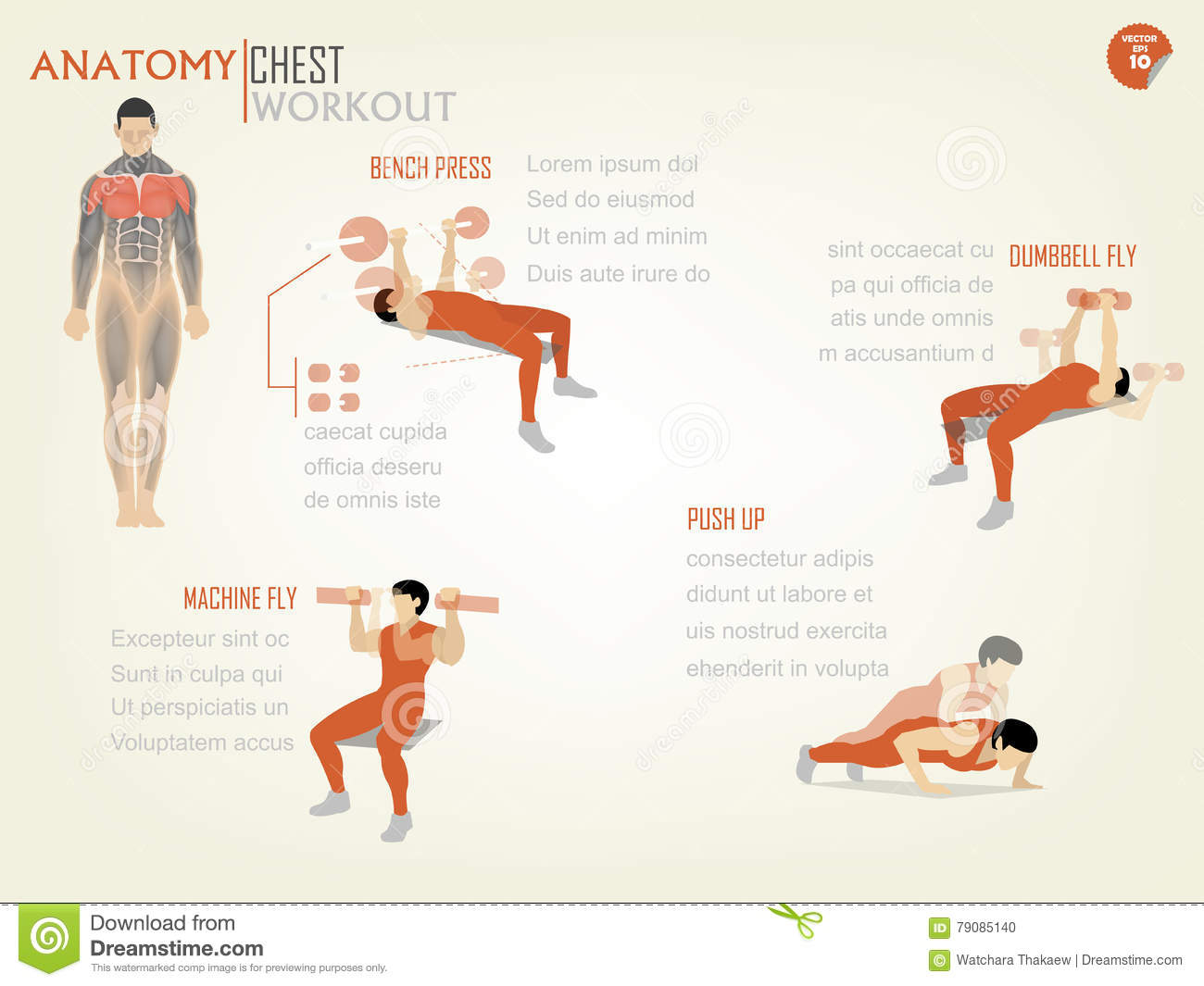 Beautiful Design Infographic Of Chest Workout Consist Stock Vector ...