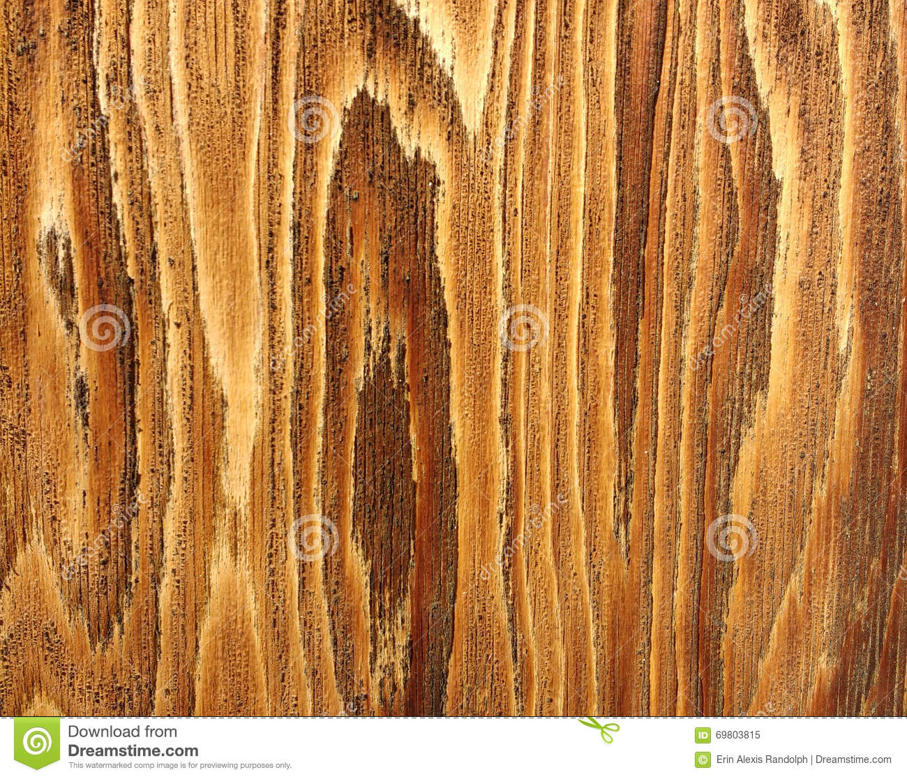 Beautiful Detail Of Wood Grain Stock Photo Image 69803815