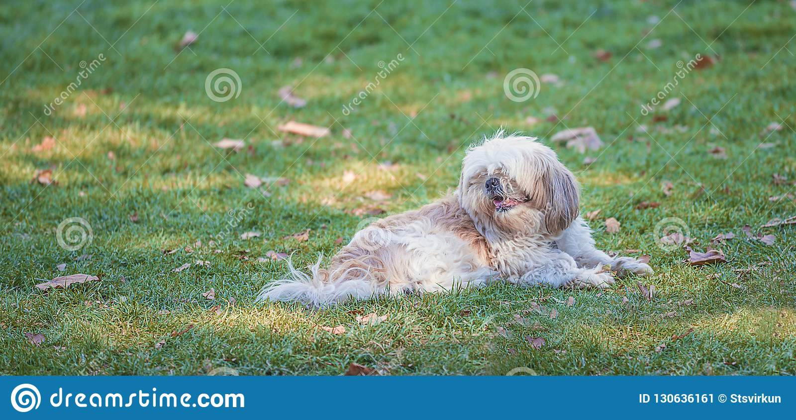 Beautiful dog lying on the green grass